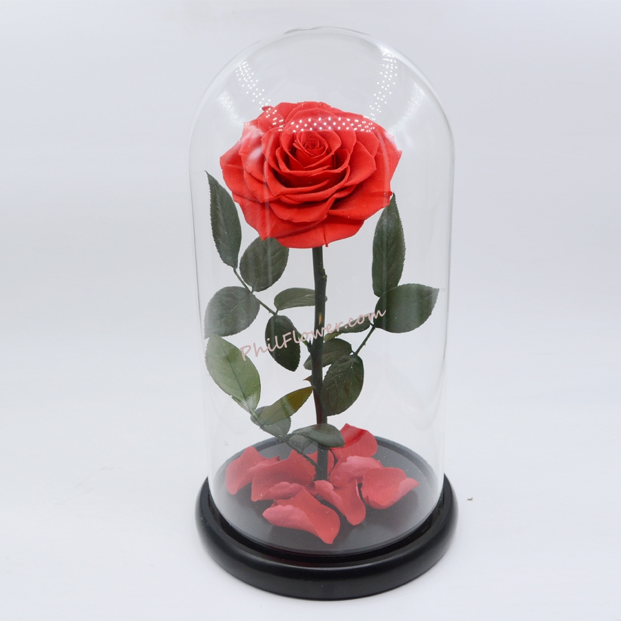 Single Red Rose In Glass Dome To Manila Philippines